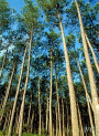French Pine Bark Extract 25 (Liquid)