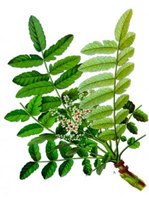 Boswellia Serrata Extract (Boswellic Acid)