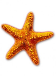 RETINAT™ (Starfish Extract)