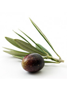 Squalane (Olive)