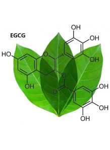 Pure-EGCG™ (Green Tea Extract, 98% EGCG)