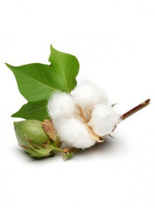 Cotton Blossom (Bath & Body)
