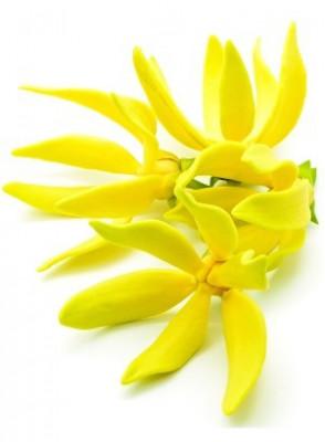 Ylang Ylang Oil (Flower)
