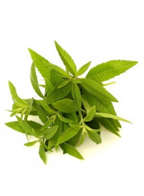 Lemon Verbena Oil