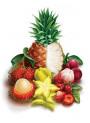 Bescents F (fruit - ผลไม้)