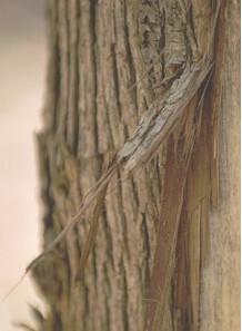 Bescents W (wood - ไม้ เปลือกไม้)