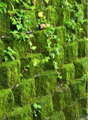 Bescents Y (moss - มอสส์)