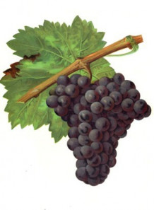 Herbal Grape