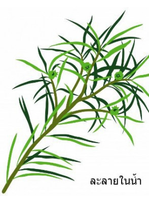 Tea Tree Oil (Water Soluble)