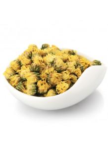 Chrysanthemum Absolute