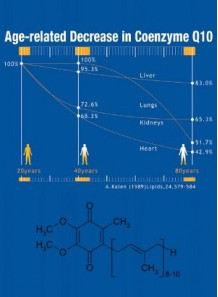 Coenzyme Q10 (Powder)