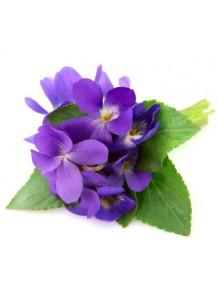 Viola Odorata (Violet Leaf) Extract สารสกัดสวีทไวโอเล็ต