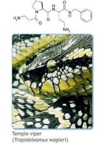 Dipeptide Diaminobutyroyl Benzylamide Diacetate (Syn-Ake eq.)