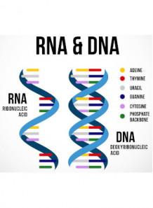 RNA/DNA Essence