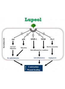 Hi-Lupeol™