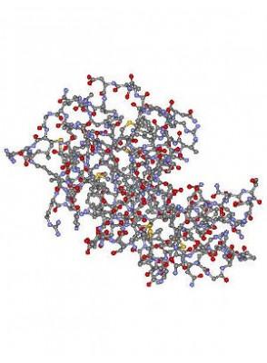 White Egg Enzyme (Acnezyme™)