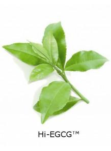 Hi-EGCG™ (Green Tea Extract)