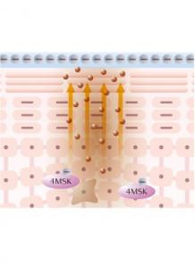 4MSK™ (Potassium Methoxysalicylate)