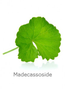 Centella Asiatica (80% Madecassoside)