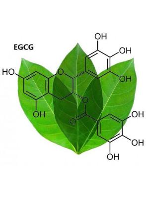 Pure-EGCG™ (Green Tea Extract, 98% EGCG)