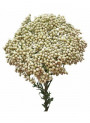 Rice Flower & Shea (Bath and Body)