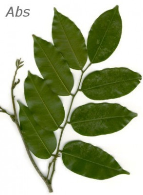 Peru Balsam Resin