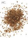 Carrot Seed Oil (High Carotol)