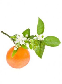 Orange Blossom (flower) Absolute