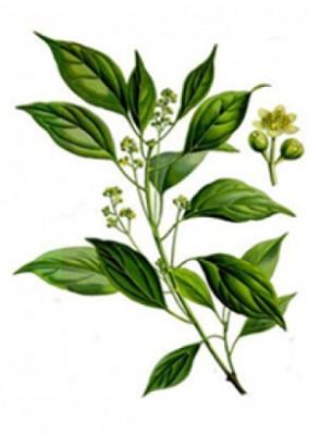 Ho Oil (Leaf)