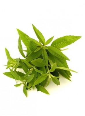 Lemon Verbena Oil