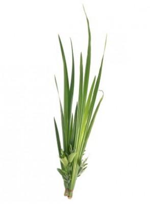 Palmarosa Oil (Gingergrass Oil)