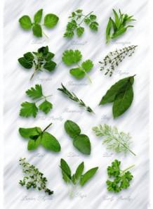 Bescents H (herb - สมุนไพร)