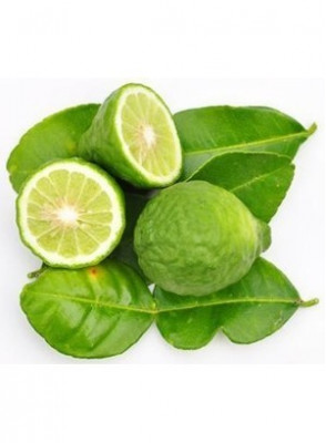 Bergamot Fragrance Oil