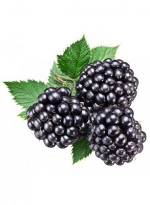 Dewberry Fruits