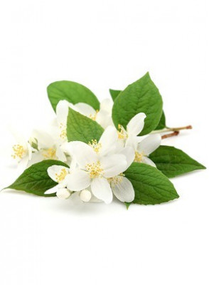 Jasmine (Warm & Spicy) Fragrance Oil
