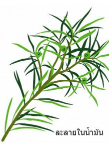 Tea Tree Oil (Australian - Oil Soluble)