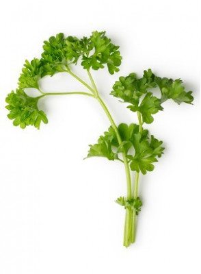 Parsley Lover
