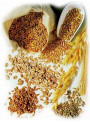 Hydro Protein (Soy, Oat, Wheat, Maize Protein)