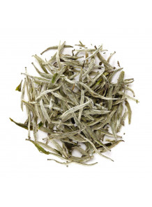 White Tea Absolute