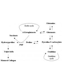 Ketoglutaric acid (alpha)
