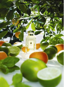 Lime Basil & Mandarin (compare to Jo Malone)