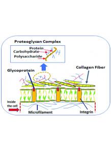 Glycoprotein