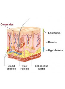 Ceramide 2 / Ceramide NG