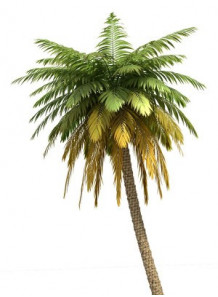 LipidSoft™ Palm