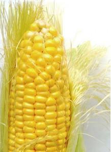 Soluble Corn Fiber (Resistant Dextrin)