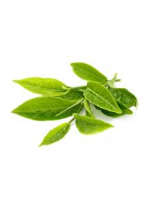 Green Tea Extract สารสกัดจากชาเขียว (EGCG 98%)