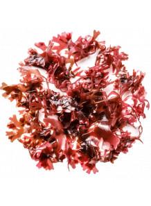 Astaxanthin แอสตาแซนธิน จากสาหร่ายสีแดง (5%)