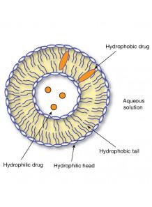 Phosphatidylcholine 90% (จาก Soy Lecithin)