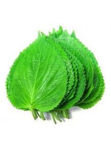 Perilla Leaf Extract สารสกัด งาขี้ม่อน