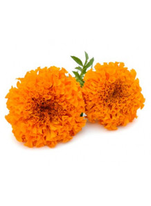 Marigold Extract (Lutein 5%)